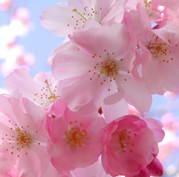 Mùa Xuân ở Nhật Bản - không chỉ có hoa anh đào