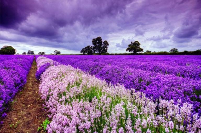 Vẻ đẹp thiên nhiên ban tặng cho Hokkaido